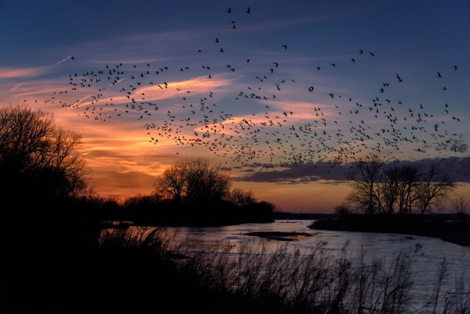 Bioacoustics-the-future-of-wildlife-conservation